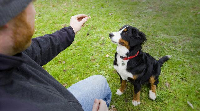 Как научить собаку команде сидеть: щенка и взрослую