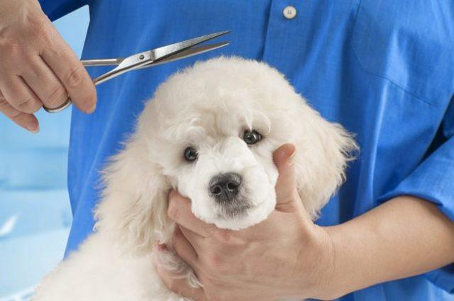 Кожные заболевания у собак: виды, симптомы, описание с фото и лечение