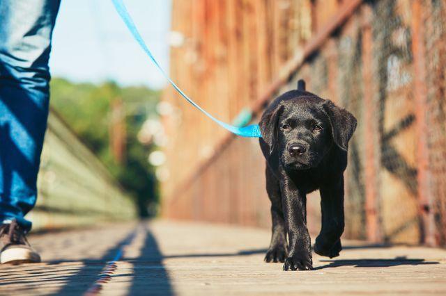 Сердечная недостаточность у собак: признаки, симптомы и лечение