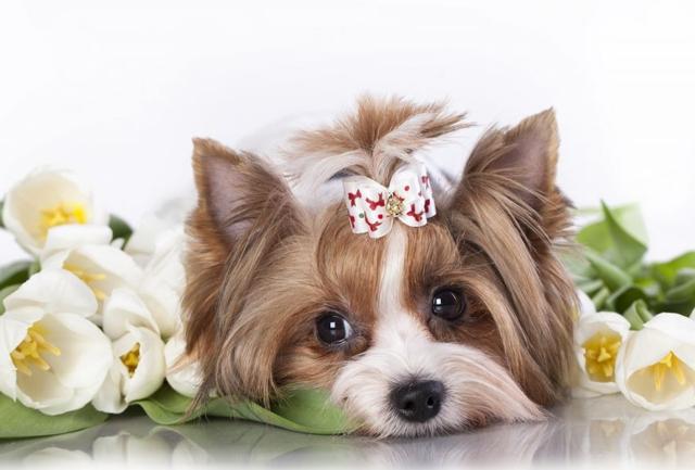 Клички для собак мальчиков маленьких пород - как выбрать имя для щенка