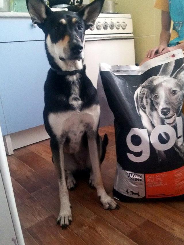 Корм go для собак отзывы ветеринаров и разбор состава корма Гоу