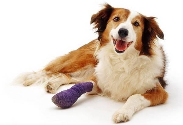 Артрит у собак: симптомы и признаки, лечение, препараты