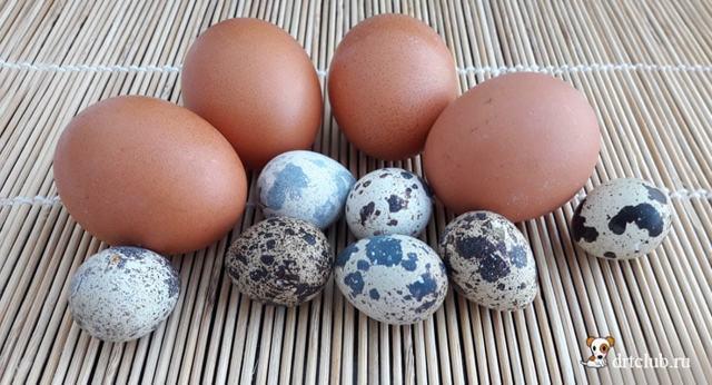 Можно ли собаке давать яйца: вареные, сырые и как часто