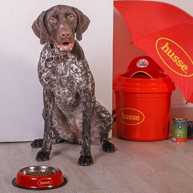 husse корм для собак: состав, класс, отзывы владельцев и ветеринаров