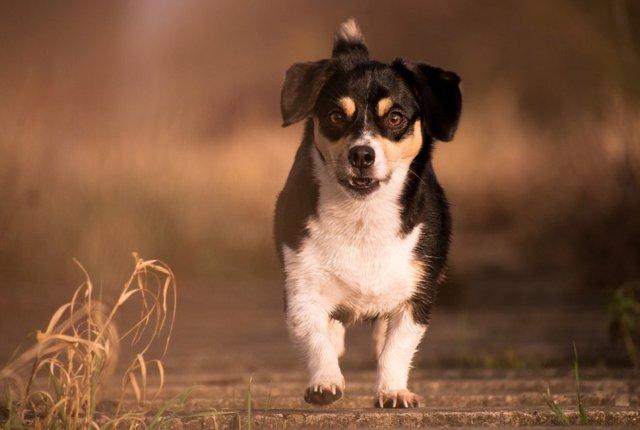 Стоит ли брать собаку из приюта - плюсы и минусы