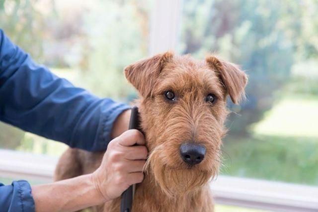 Тримминг собак: инструменты, инструкция тримминга с видео