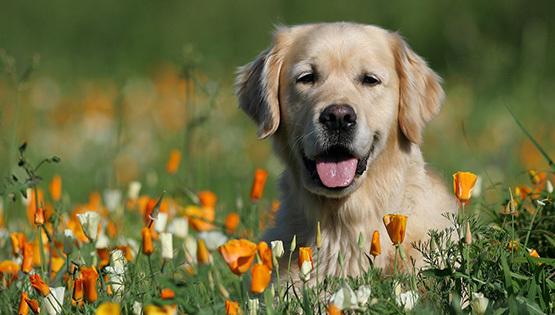 Аll dogs корм для собак: отзывы ветеринаров, цена и где купить