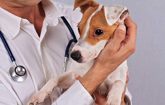 Аллергия у собак: признаки, симптомы и лечение