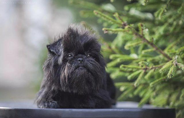 Черные породы собак с названиями и фотографиями