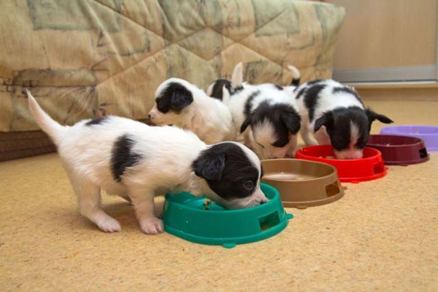 Чем кормить щенка от 1 месяца до года: сколько раз, чем нельзя