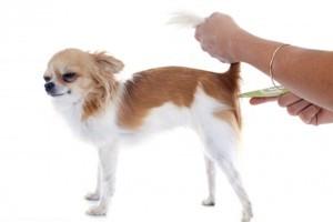 Температура тела у собаки: норма, симптомы, чем и как померить