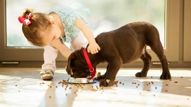 Можно или нельзя давать собакам кошачий корм: почему ест и как отучить