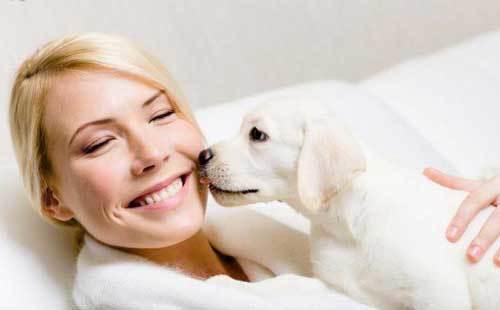 Запах изо рта у собаки: причины, как избавиться и что делать