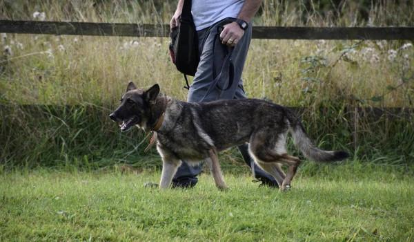 Как научить собаку команде рядом: требования и способы