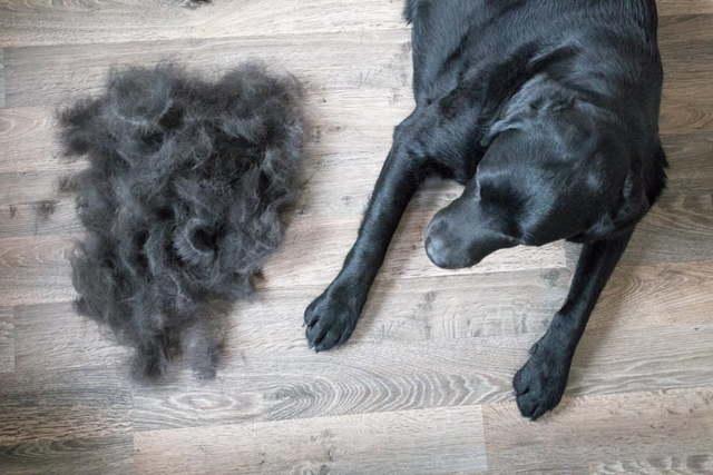 У собаки выпадает шерсть на спине: причины, лечение, профилактика