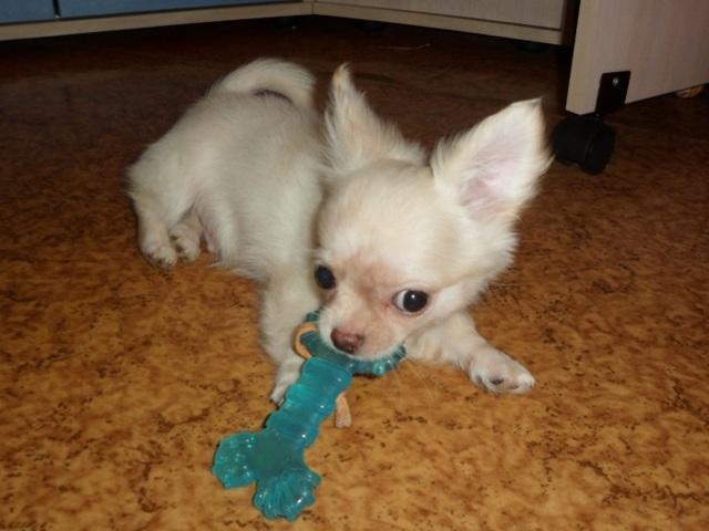 Как отучить щенка кусаться - что делать если кусается за ноги и руки