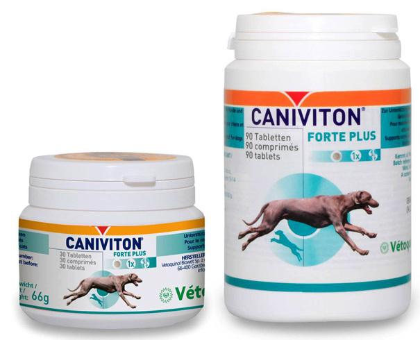 Лососевое масло для собак отзывы ветеринаров, как давать, дозировка