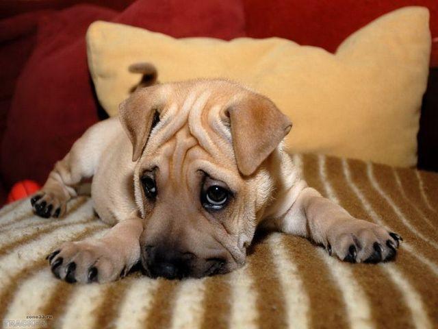 Рахит у собак и щенков: симптомы и лечение