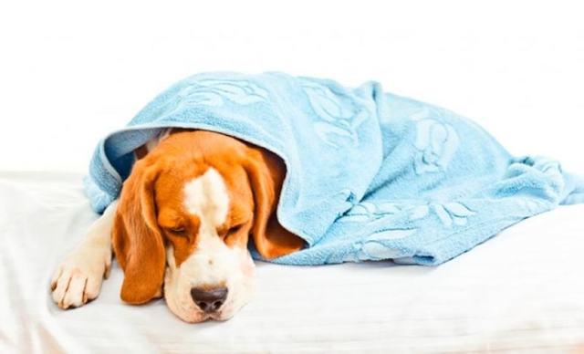 Ветом для собак: инструкция по применению, цена, отзывы