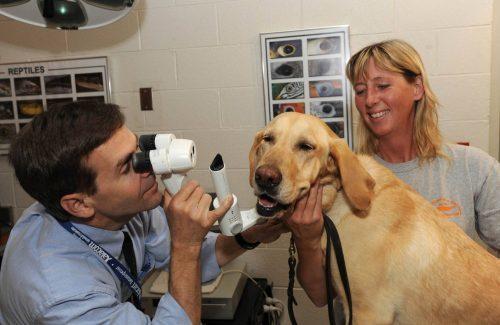 Глаукома у собак: симптомы, лечение, фото