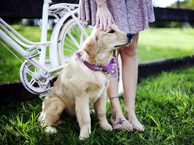 Как научить собаку команде ко мне: щенка и взрослую