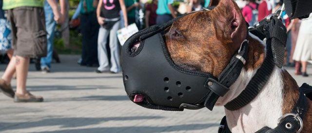 Как приучить собаку к наморднику: взрослую и щенка