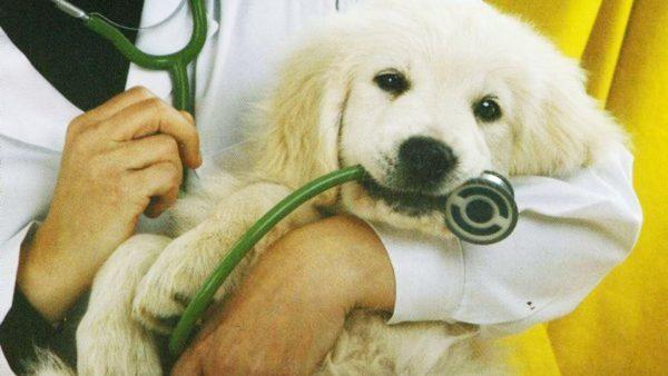 Гингивит у собак: симптомы и лечение