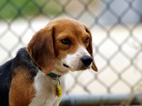 Чипирование собак - что это такое, сколько стоит, как происходит