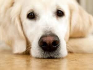 Энтерит у собак: виды, симптомы, диагностика, лечение