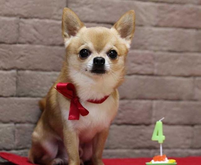 Маленькие породы собак с названиями, размером и фото