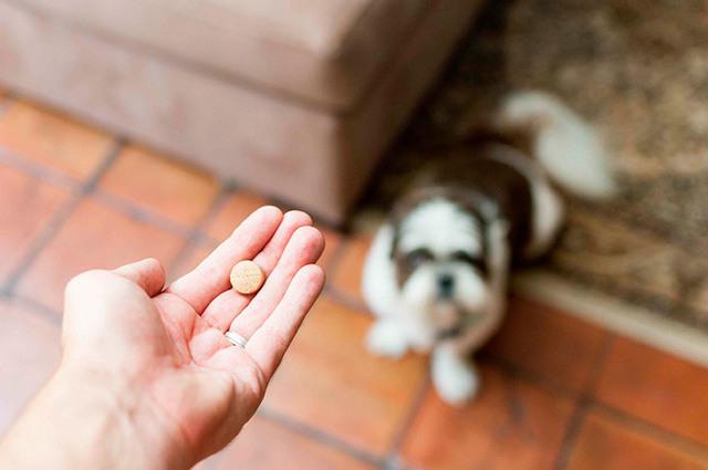 Таблетки от клещей для собак: инструкции, действие, рейтинг, цена и где купить