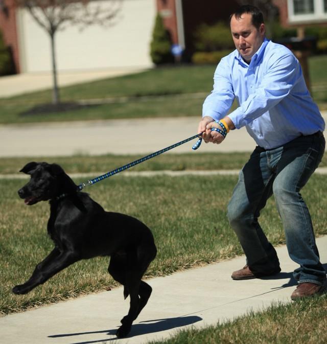 Как приучить щенка и взрослую собаку к поводку