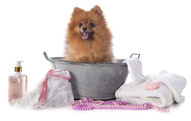 Как и чем можно помыть собаку в салоне и дома: инструкция