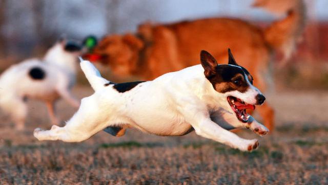 Почему у собаки текут слюни - причины, симптомы и лечение