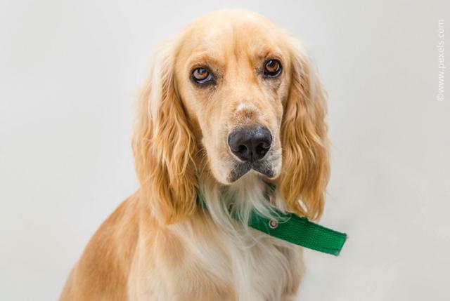 Бронхит у собак: симптомы, лечение и виды
