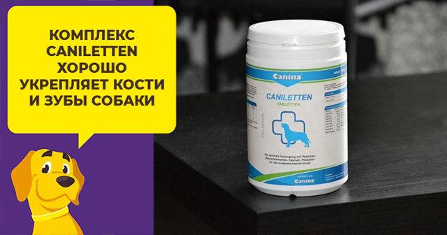 Канина (canina) витамины для собак отзывы ветеринаров, как давать для шерсти, дозировка