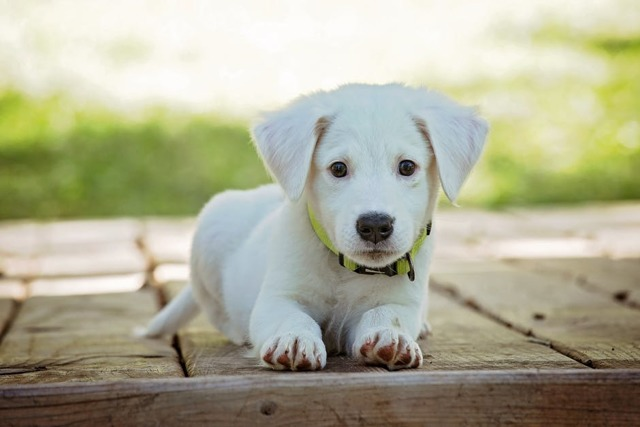 Как подстричь собаке когти в домашних условиях: инструменты, схемы и цена