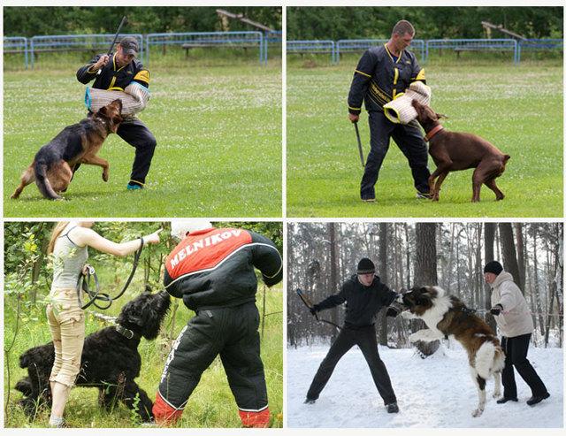 Как научить собаку команде фас, взять и чужой самостоятельно