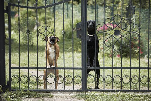 Какую породу собаки выбрать: для квартиры, семьи и охраны дома