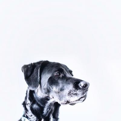 Первые признаки родов у собак - как определить, подготовка к родам
