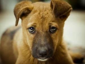 Как отучить собаку гадить и писать дома: щенка и взрослую