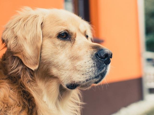 Как вытащить клеща у собаки в домашних условиях