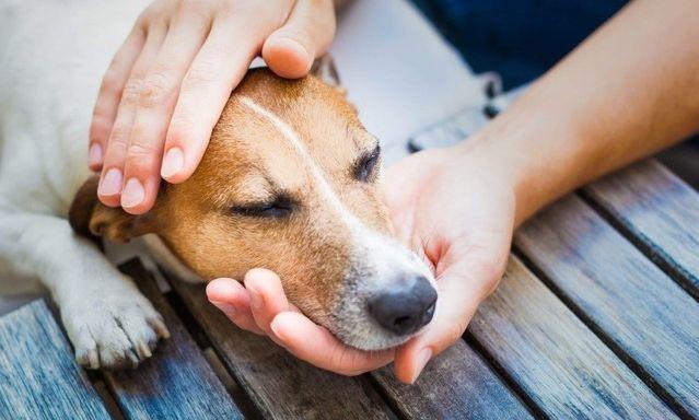 Эпилепсия у собак: причины, симптомы, лечение, что делать при приступе