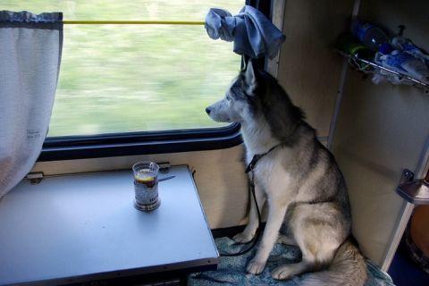 Правила перевозки собак 2020: в поезде, самолете, автобусе, электричке, авто