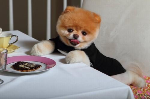 Чем кормить шпица померанского, немецкого: взрослого и щенка по месяцам