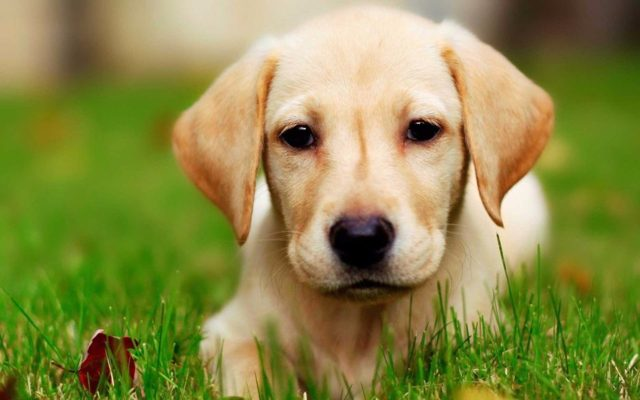 Как сделать укол собаке: внутримышечно, в холку, видео