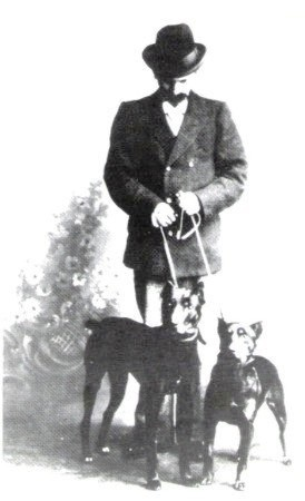 Доберман: описание породы, характеристики, цена и где купить щенка, фото
