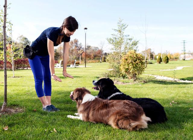 Как научить собаку команде лежать в домашних условиях