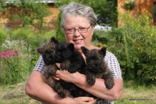 Ирландский терьер - описание породы, характер, фото собаки, цена и где купить щенка