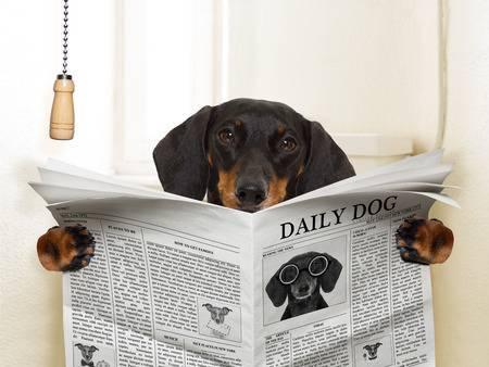 Как приучить собаку или щенка к туалету: к лотку, на улицу